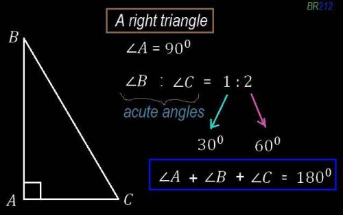 The ratio of the measure of the acute angle in a right triangle is 1/2 . find the measures of the tw
